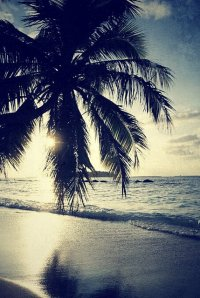 palma na Malediwach
